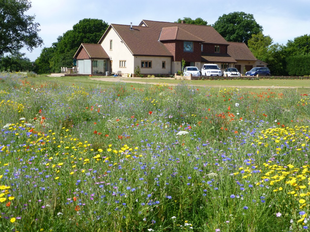 Using wild flowers in gardens wild flower lawns for Landscape my garden