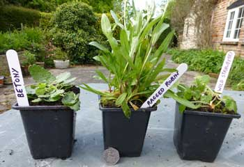 Wild flower plant collections