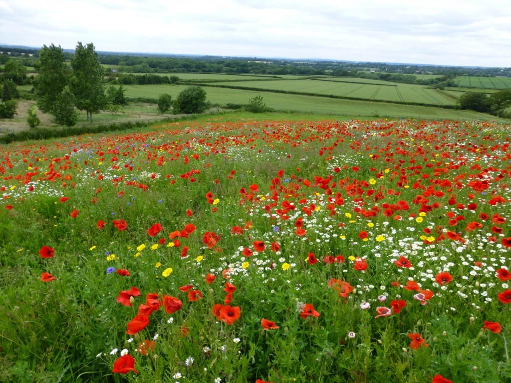 Buy Wildflower Seeds Wildflower Seed Mixtures Amp Wild