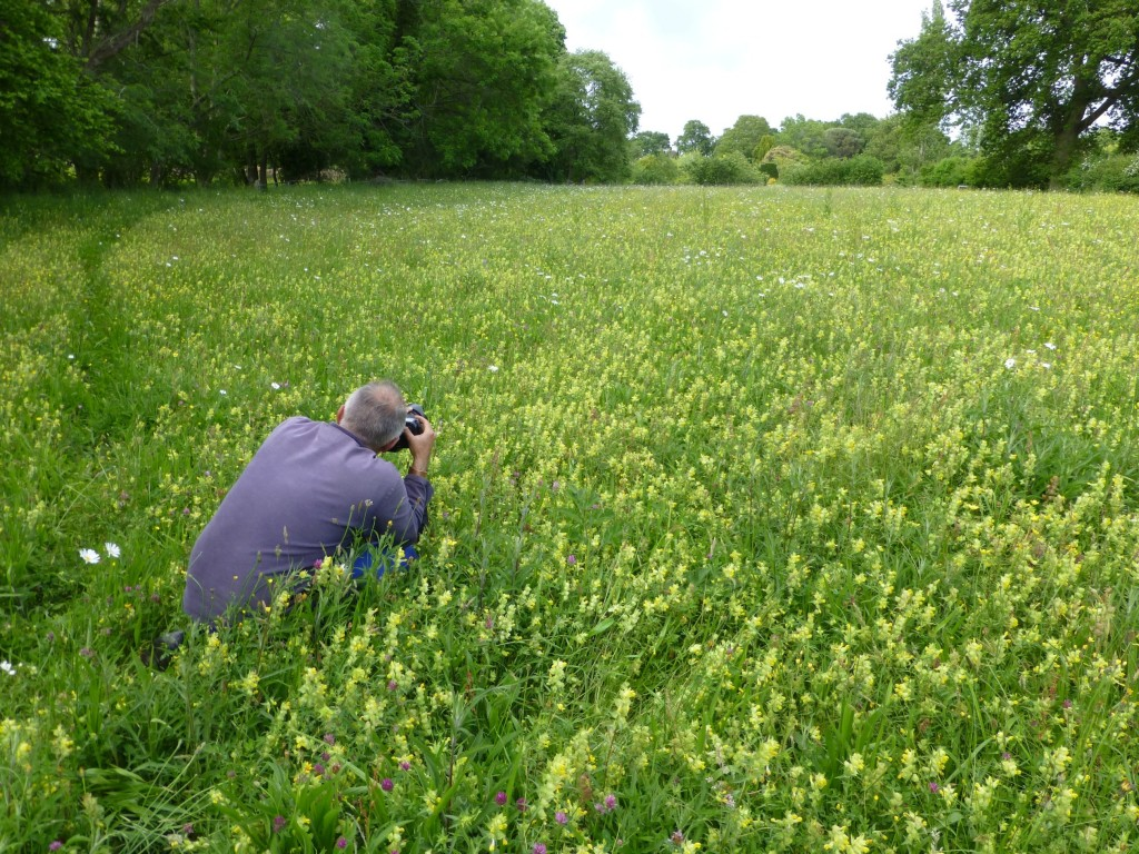 Great Dixter And Yellow Rattle Wild Flower Lawns Meadows Buy