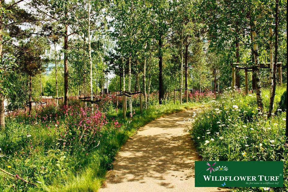 Shade tolerant wild flower turf