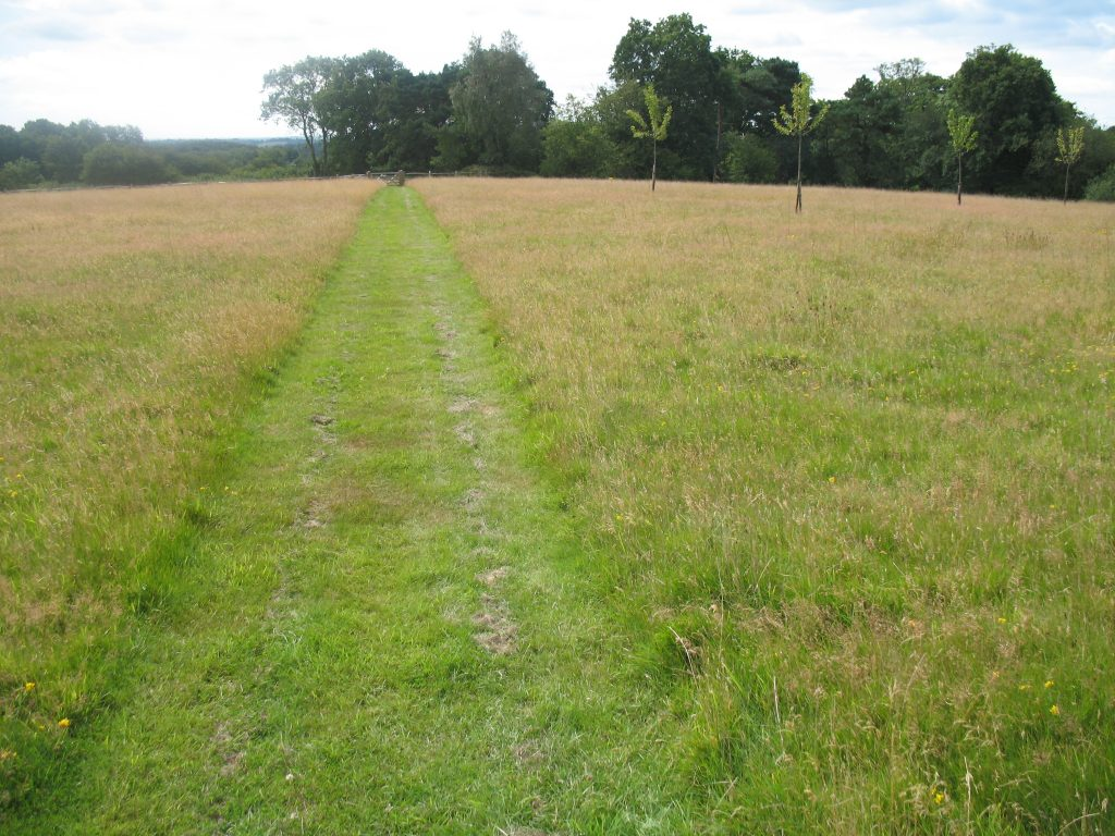 Field in its original grassy state