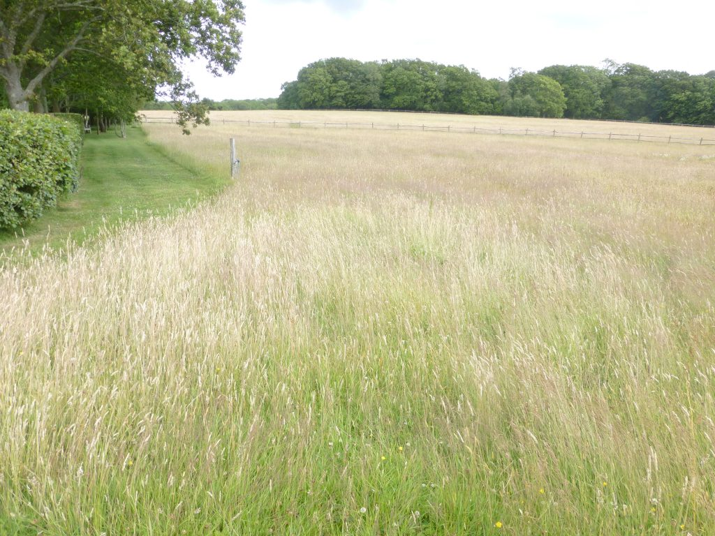 An area of the field still requiring Yellow Rattle colonisation in 2015